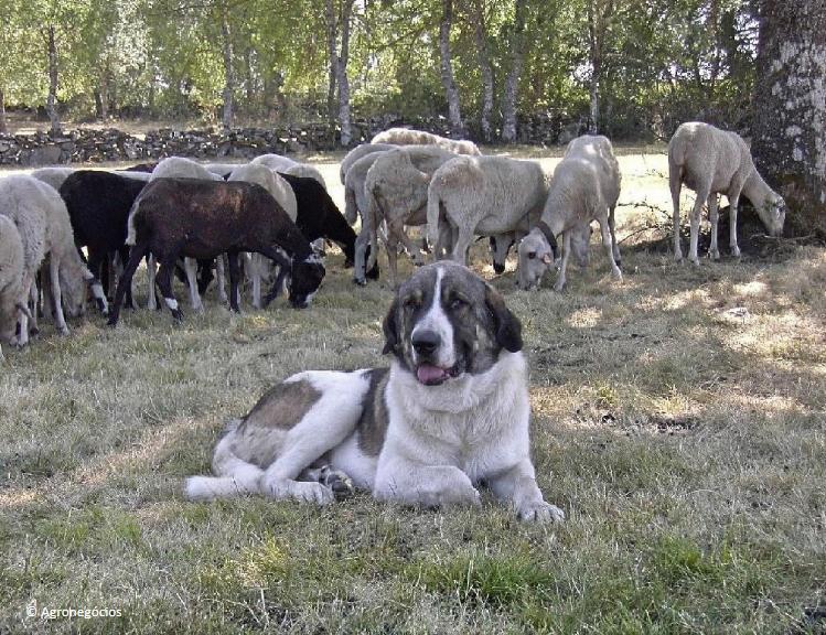 Projeto Cão de Guarda